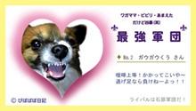 ku-chan_b[1].jpg